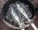 riba-na-roštilju